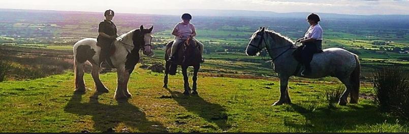Sheans Horse Farm 1